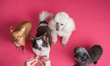 Comment couper les ongles de son chien : que faire pour ne pas le blesser ?