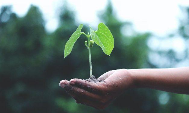 Comment faire germer un gland : comment réussir à faire pousser un grand chêne à partir d'un gland ?