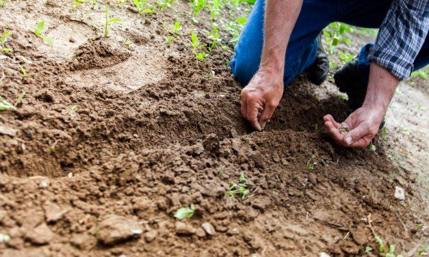 Comment faire germer une graine : quelles sont les bases à avoir avant de se lancer ?