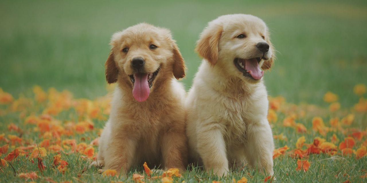 Comment prendre soin de son animal domestique : quel est le meilleur moyen de prendre soin de son animal domestique ?
